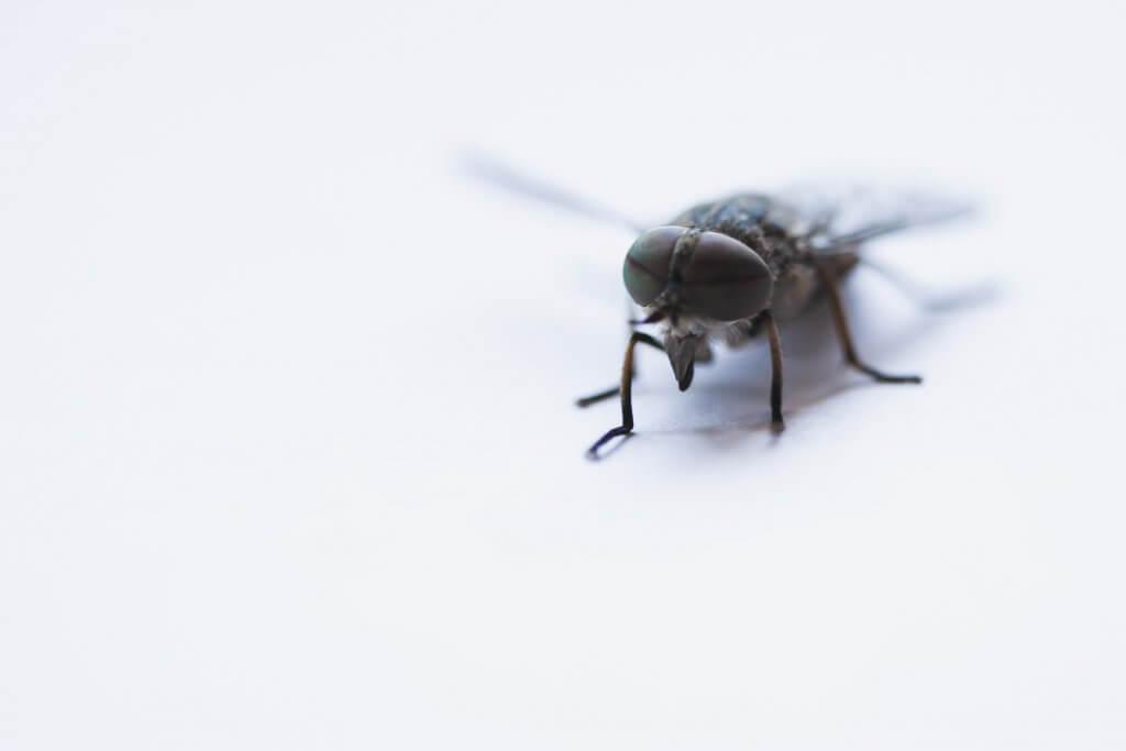 Photo of black horsefly close up. Photo by Camilo Jimenez on Unsplash.