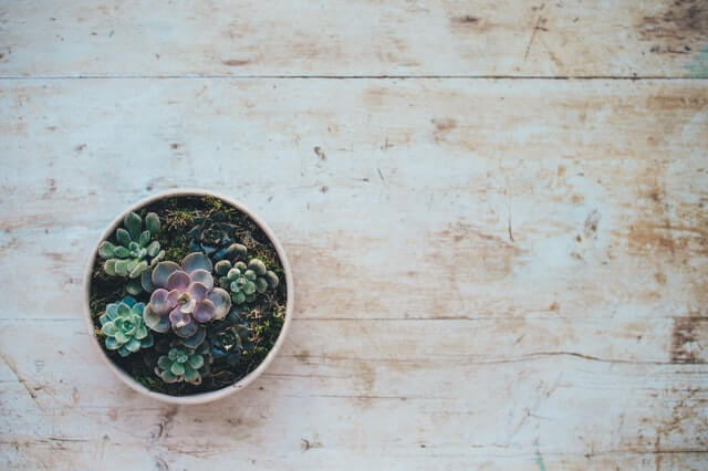 Succulent plant. Photo by Annie Spratt on Unsplash.